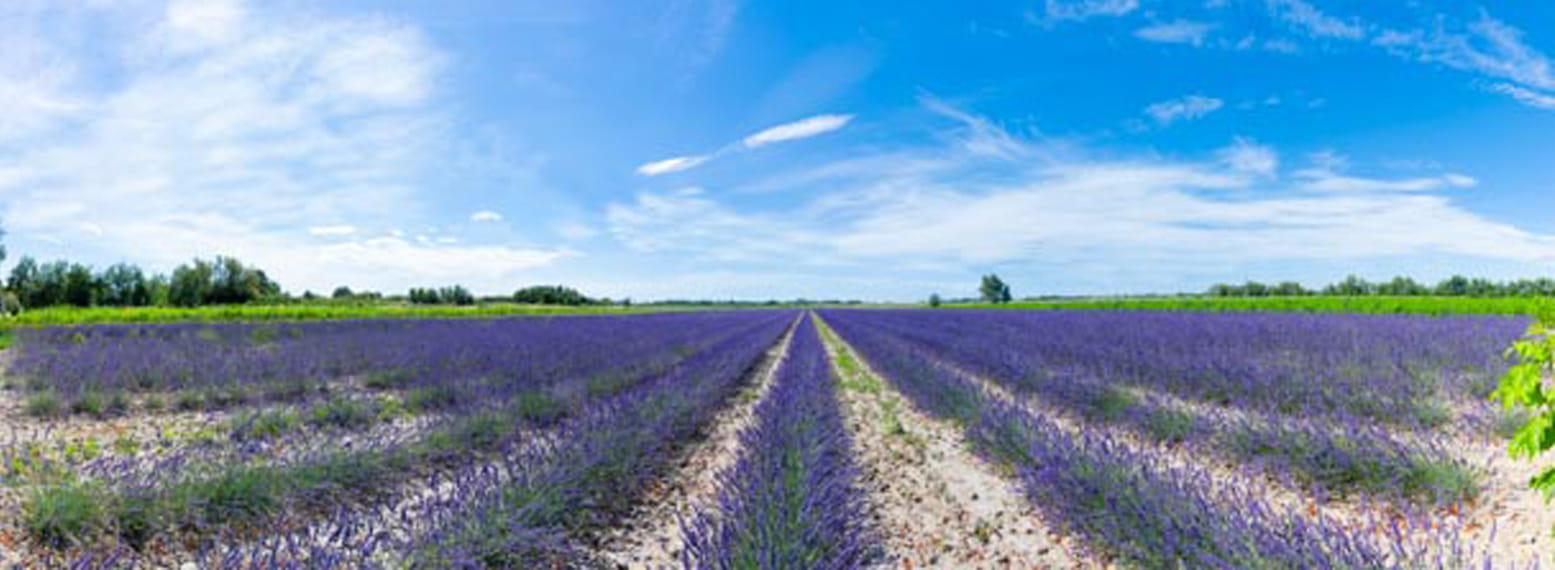 Un Mas en Provence - Bellegarde