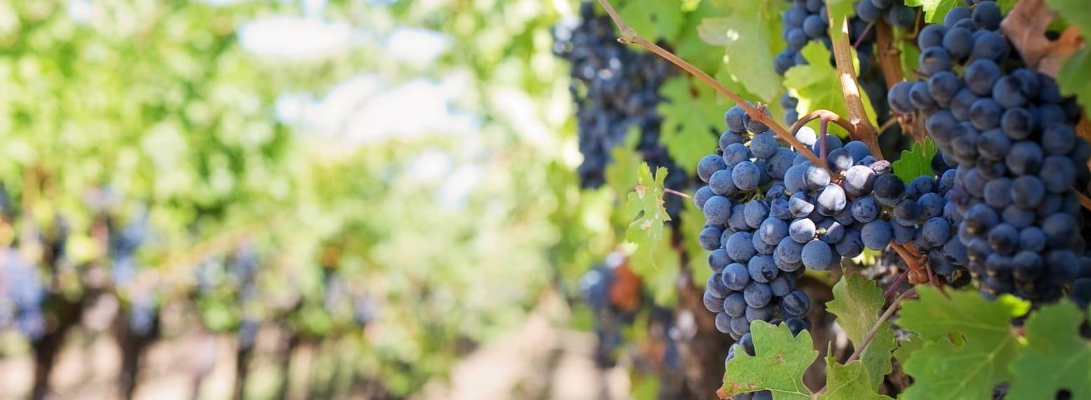 Les Domaines viticoles dans les Alpîlles