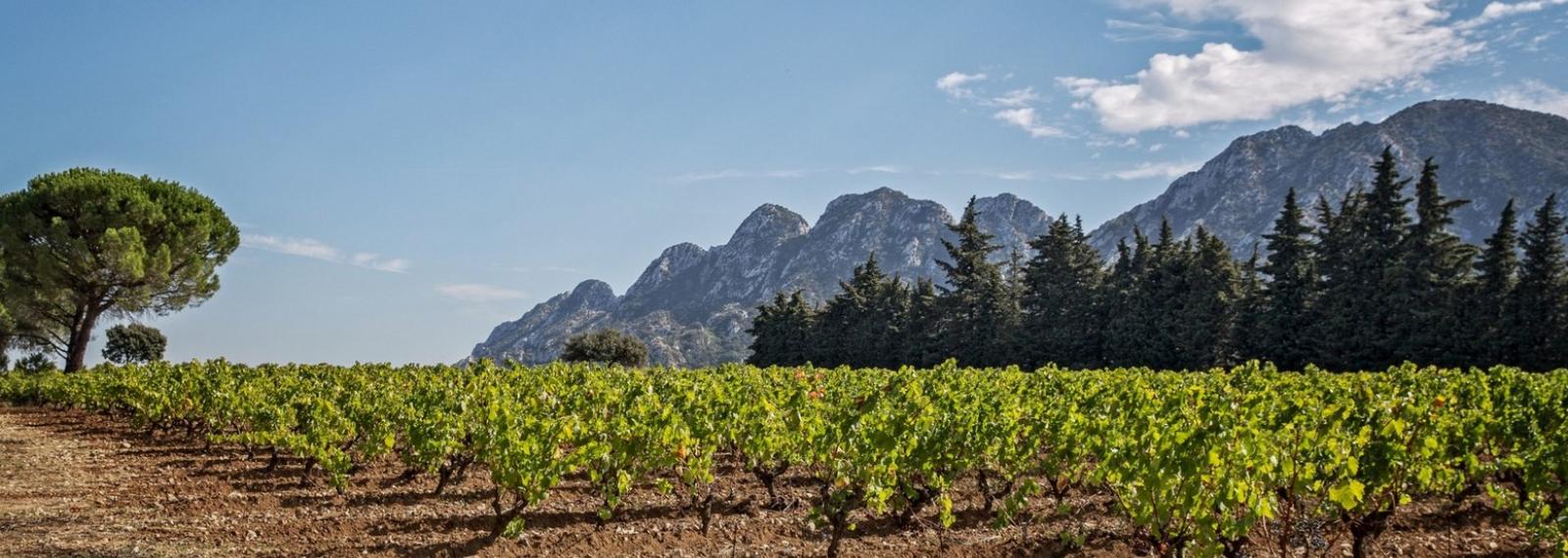Vignoble Chateau Romanin à Saint-Rémy-de-Provence