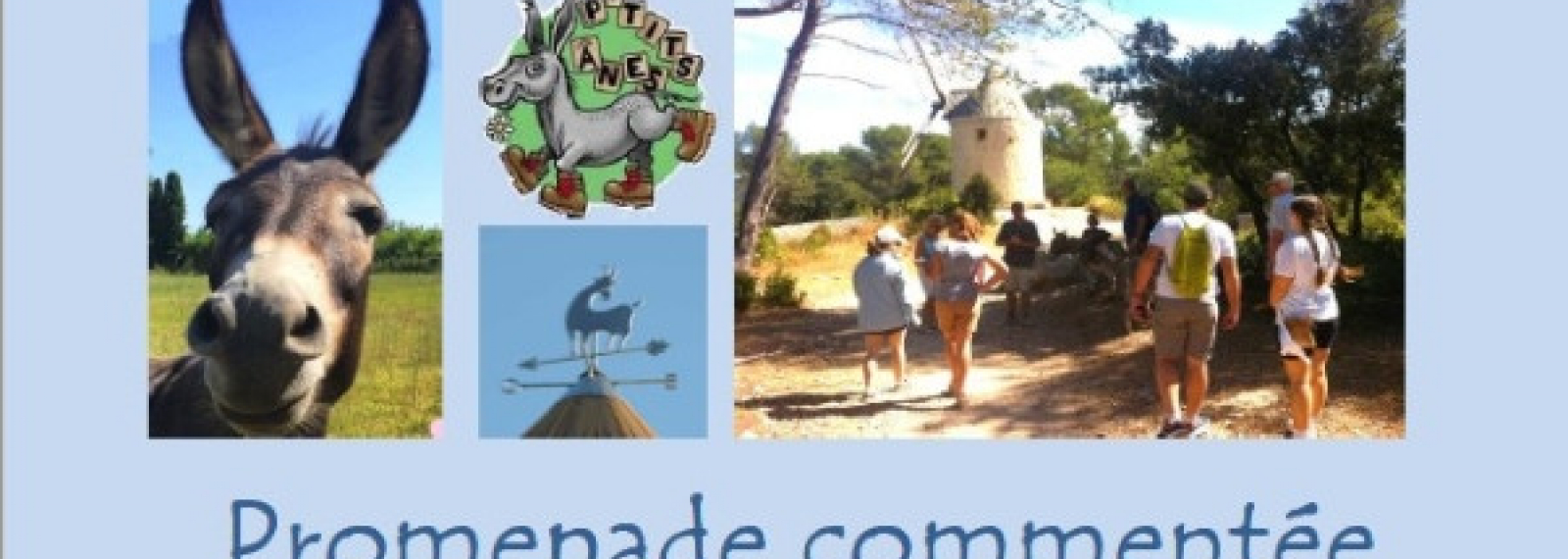 Promenade commentée au pas de l'âne sur le Sentier des Moulins d'Alphonse Daudet