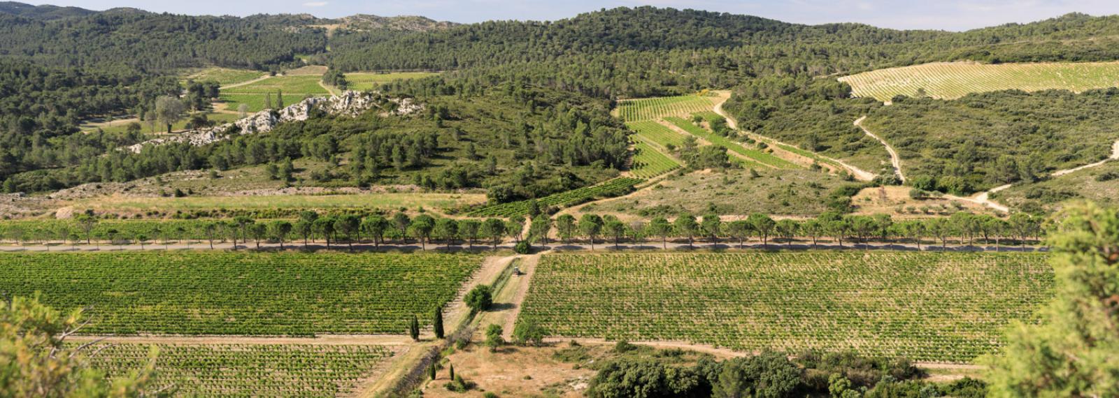 Domaine de la Vallongue à Eygalières