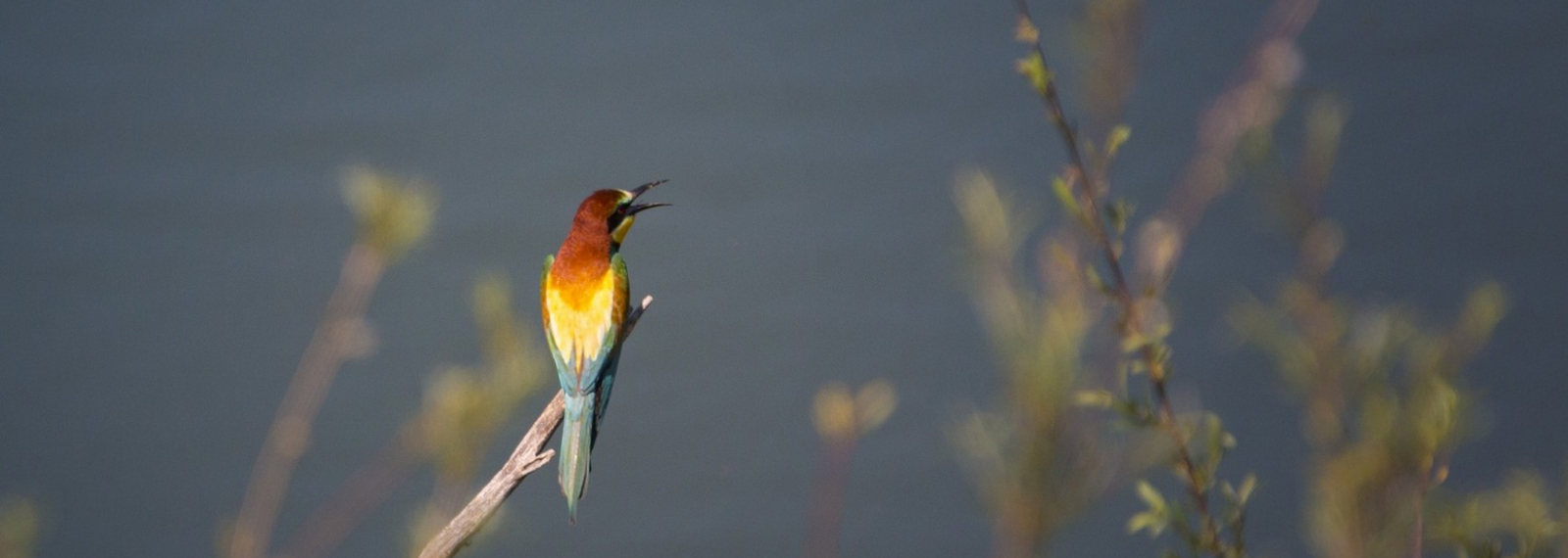 A la Découverte des oiseaux des Alpilles