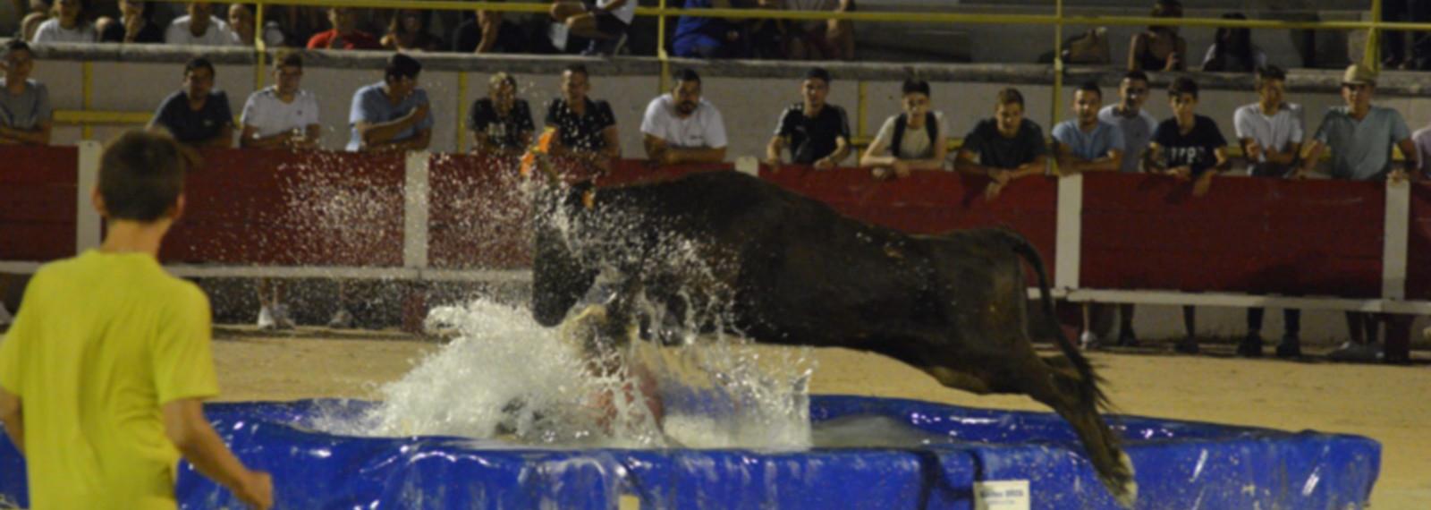Toro piscine aux Arènes de Saint-Rémy-de-Provence