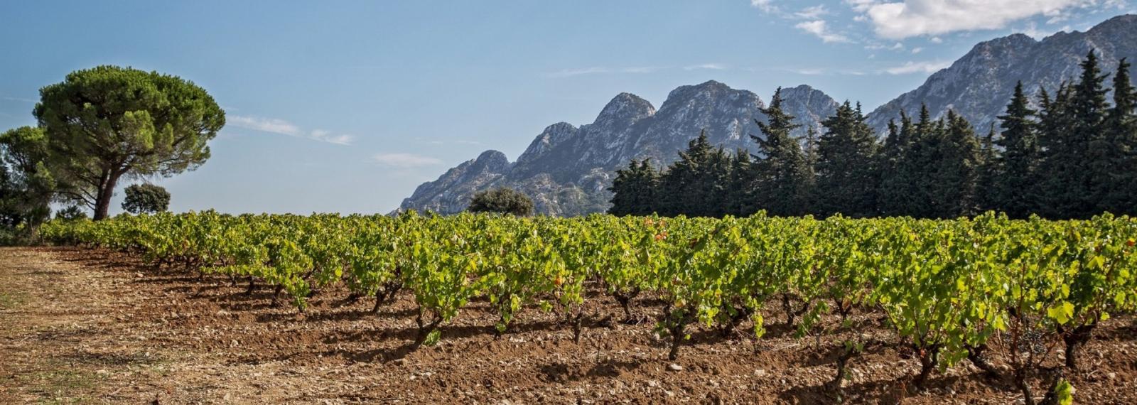 Château Romanin - Vins