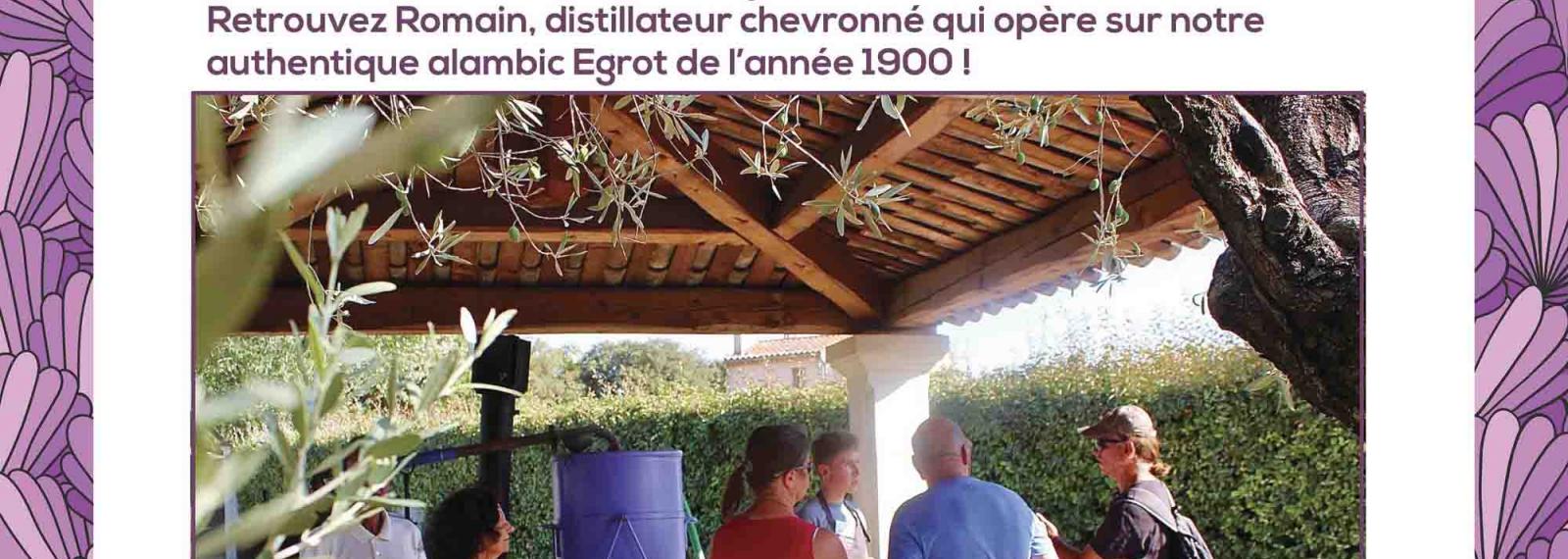 Distillation estivale au Musée de la Lavande Luberon
