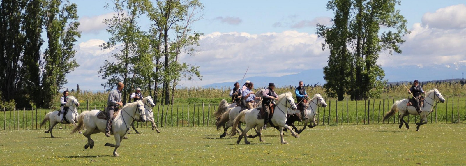 Manade Caillan à Saint-Rémy-de-Provence