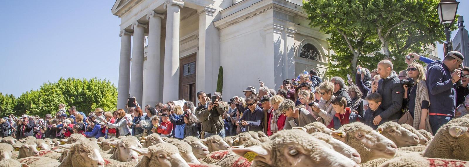 Tradition de la Transhumance à Saint-Rémy-de-Provence
