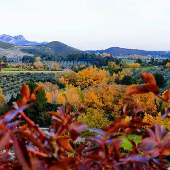 L'automne dans les Alpilles #mouries, #bouchedurhone, #bouchedurhonetourisme , #autumn🍁🍂 , #alpillesenprovence , #alpillesmountains , #alpilles❤️ , #amournature , #automne , #alpilleslovers , #bouchesdurhone , #clindoeilnature , #laprovence , #lesalpilles , #laprovenceverte , #landscapephotography , #landscape , #landscapelovers , #massifdesalpilles , #myprovence , #naturelover #naturephotography , #nature_photo , #paysagesdefrance , #paysageprovence , #provencetourisme , #photospaysages , #paysagedautomne , #provencealpescotedazur , #provencetourisme